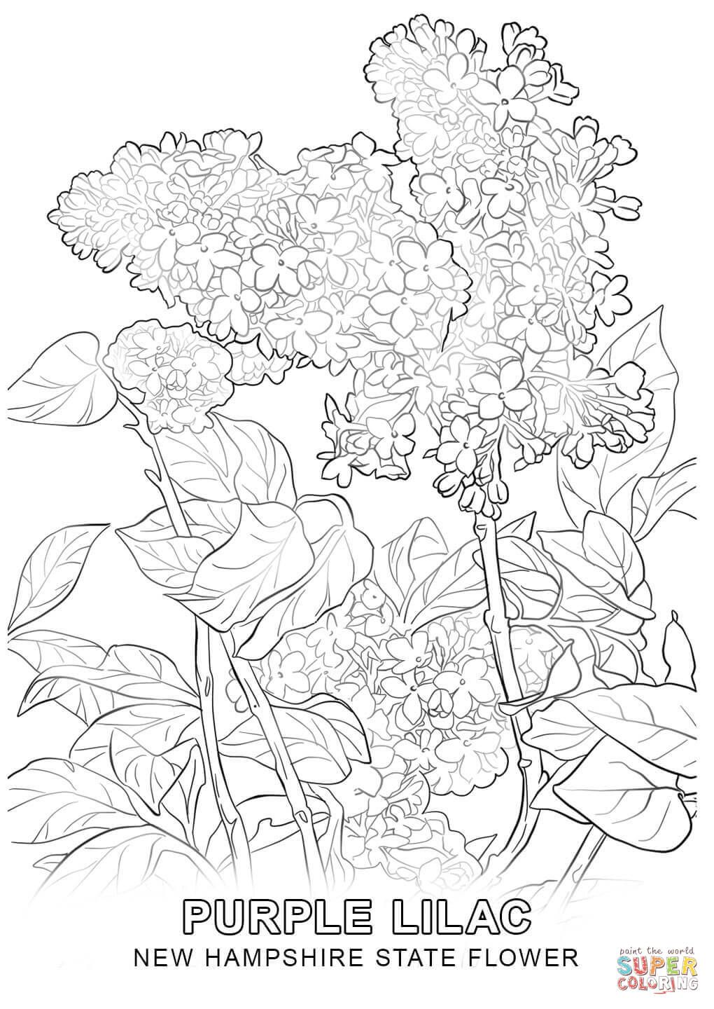 New Hampshire State Flower Coloring Pages Flower Coloring Pages
