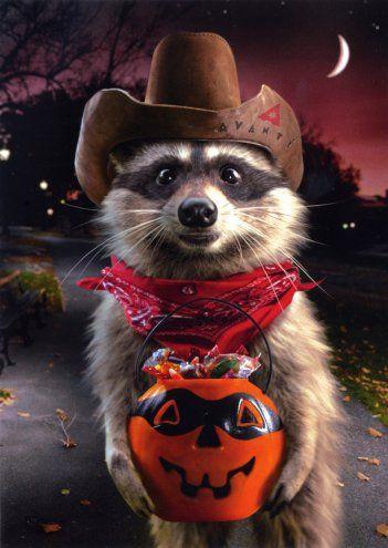 Halloween Dressed Meerkat