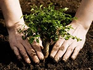 kids plant trees - - Yahoo Image Search Results