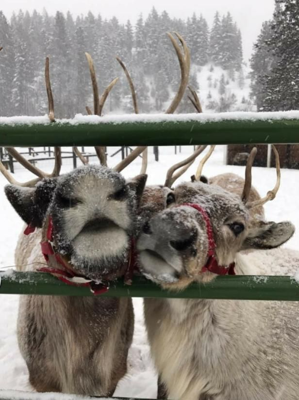 Christmas in Leavenworth: 10 Must-Dos for the Whole Family