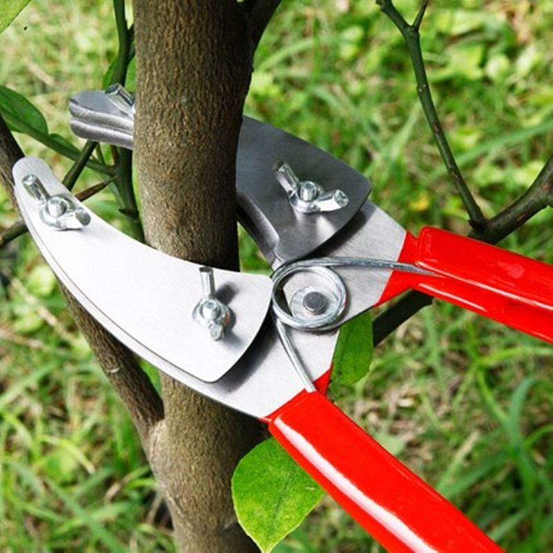 Find More Pruning Tools Information About Professional Garden Fruit Tree Ring Cutter Pruning Scissors Ring She Pruning Scissors Fruit Trees Tree Trimming Tools