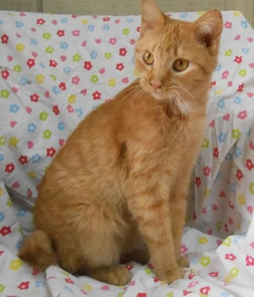 Via Grayson County Humane Society Leitchfield Ky Yes Cahoots Is A Ky Beauty This Kitty Is Very S Pet Transport No Kill Animal Shelter Pet Transport Service