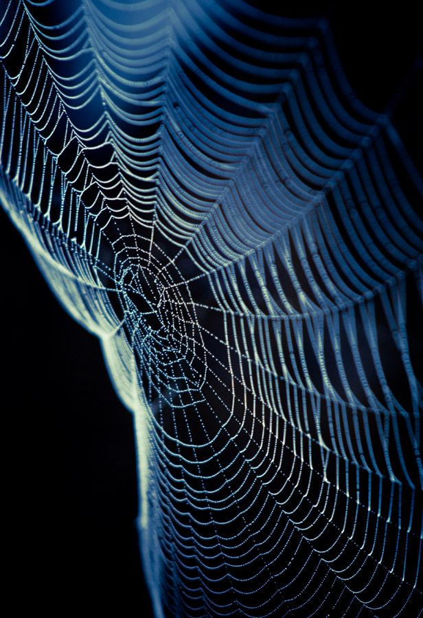 As much as I dislike spiders being anywhere near me, I have to say that their webs are pretty amazing...
