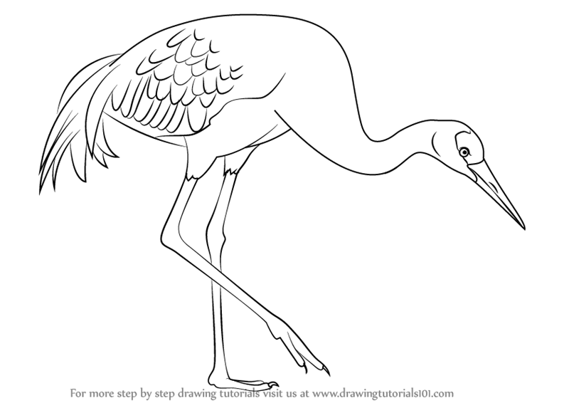 Eagle Overhead Coloring Page