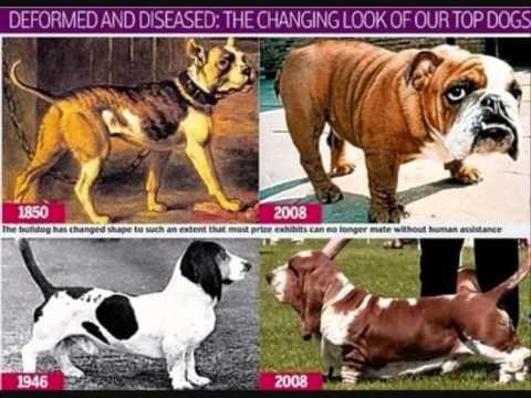 Know Your Enemy Playlist Pedigree Dog Dogs Animals