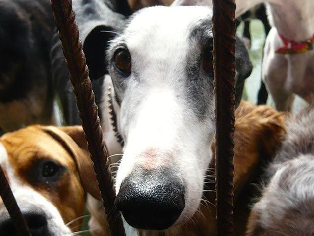 Galgo Friends Tierschutz-Shop Futter spenden