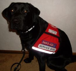 This service dog in-training can go to the bathroom on command, anywhere. (And if you command her to go and she doesn't need to, she'll pretend to go anyway.)