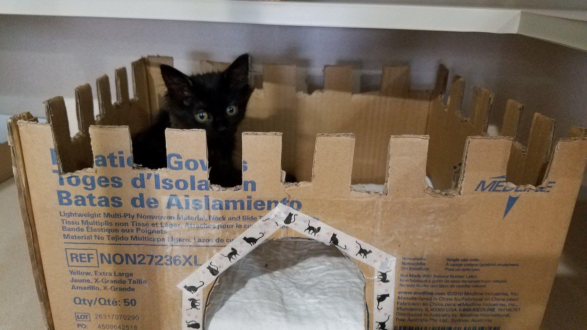 Cardboard Ideas Foster Kittens Hiding Spots Animal Rescue