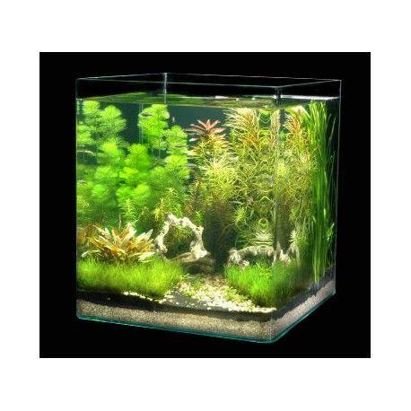 Dennerle Nano Cube 60l Betta Cube Nano Aquarium