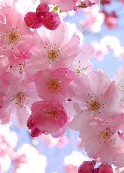 Resultado de imagen para flores par el vencedor