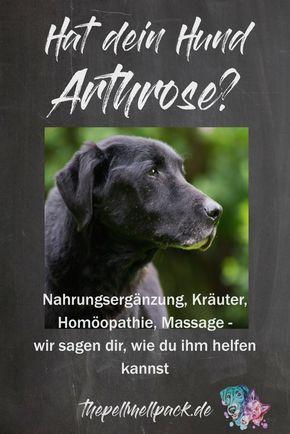 Arthrose beim Hund