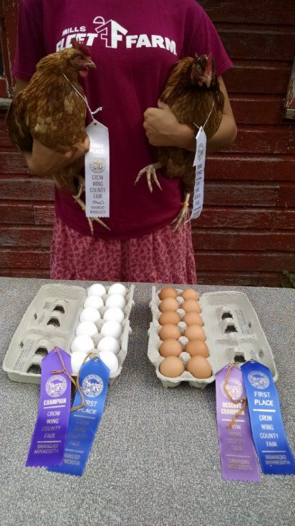 Crow Wing County Fair Champion and More! 3rd Place in the
