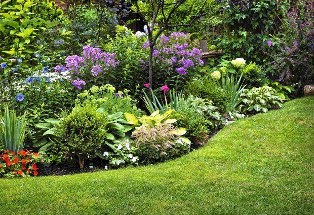 Ogrod W Cieniu Jakie Rosliny Na Rabate W Cieniu Perennial Garden Design Perennial Garden Plans Plants