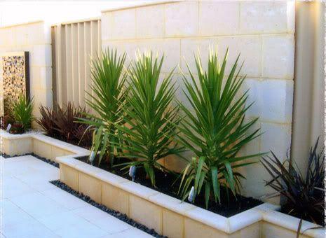 Yucca Varieties Western Australia Google Search