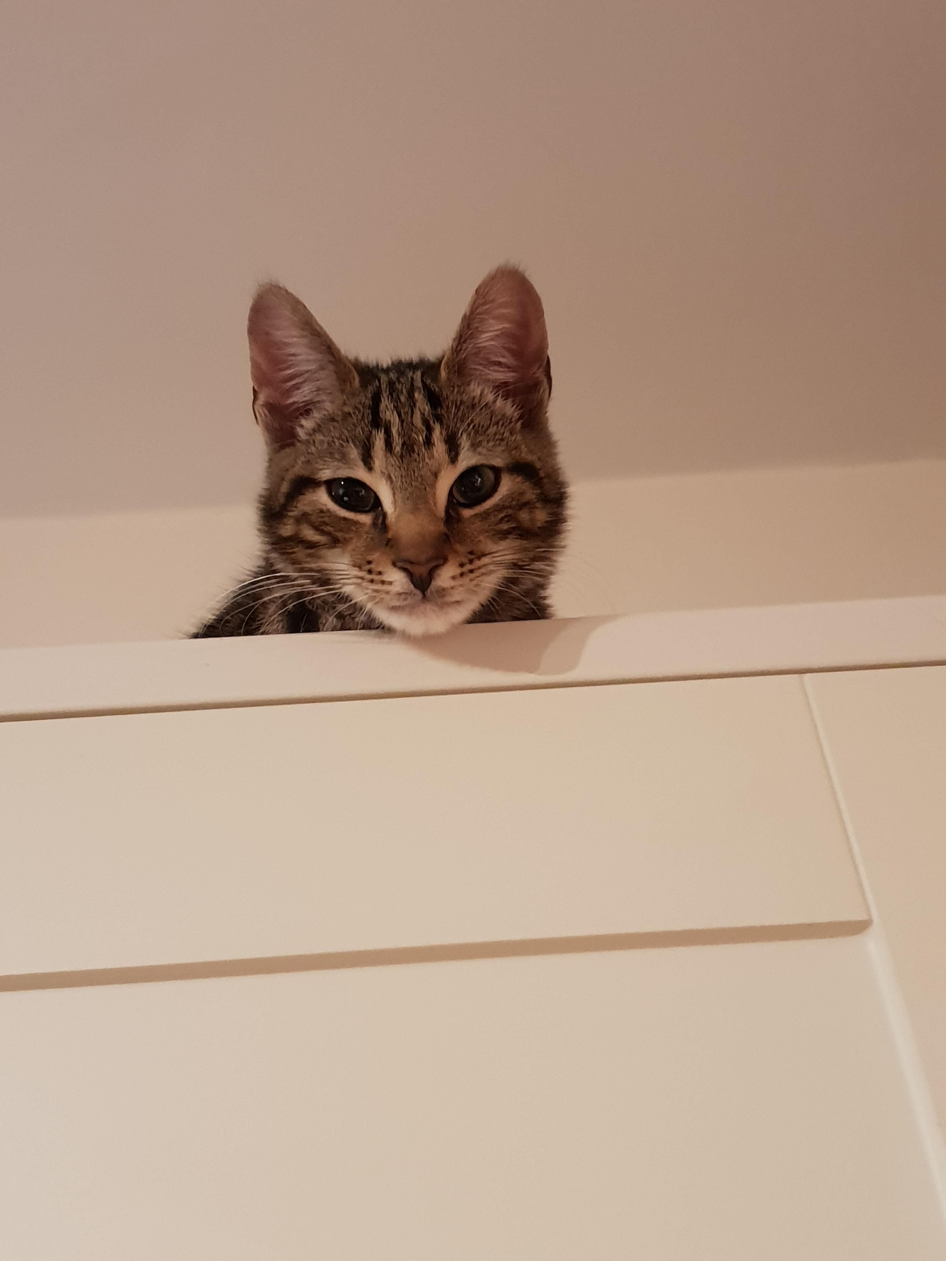 Cheeky 6 Month Old Kitten Watching Me And My Girlfriend Cook Tea He Will Try To Eat Anything That Isn T Nailed Down Ht Kittens 6 Month Olds Me As A Girlfriend