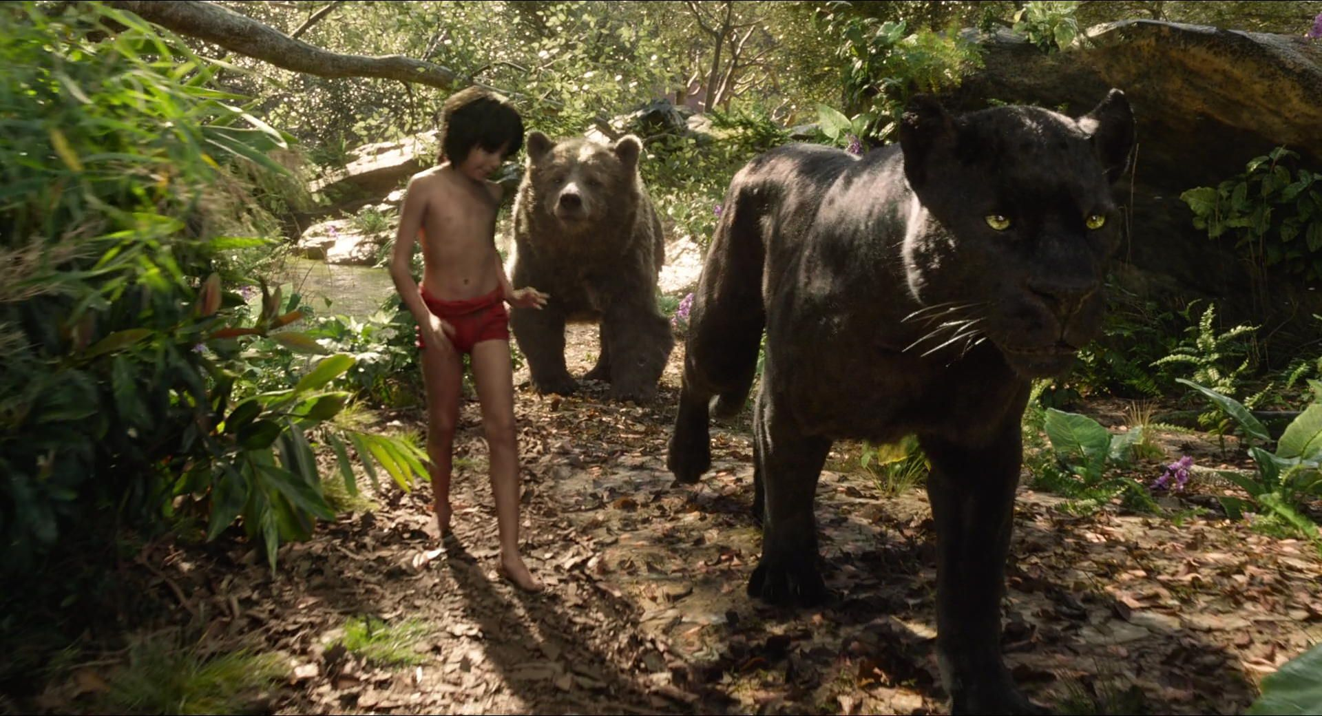 Image result for the jungle book 2016 screencaps