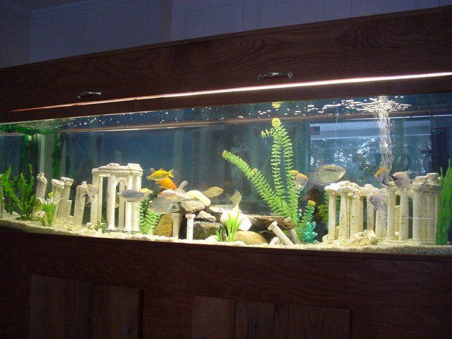 125 Gallons Going For A Lost City Of Atlantis Theme Fresh Water Fish Tank Fish Tank Seahorse Aquarium