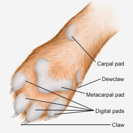 Cat Toe Diagram Wiring Diagrams Best
