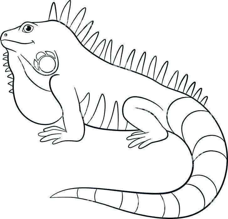 Iguana Coloring Page Amazing Iguana Coloring Pages Coloring Pages Iguana Reptiles