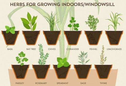 Tipps für Kräutergärten (auf Fensterbank und Balkon)