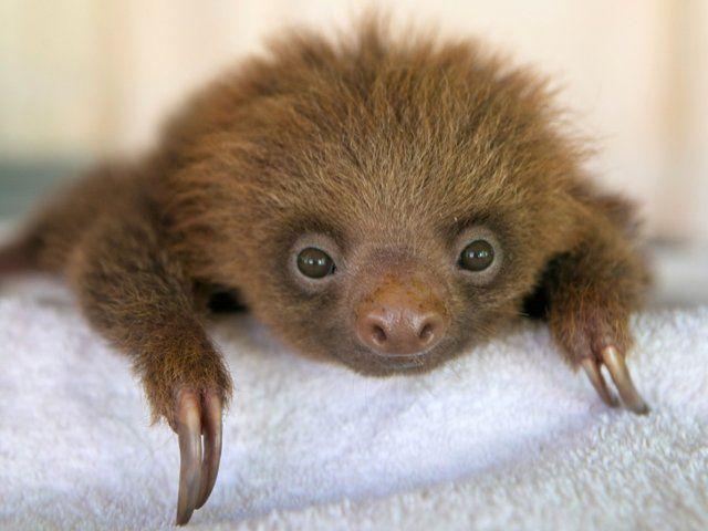 36+ Duke sloth info