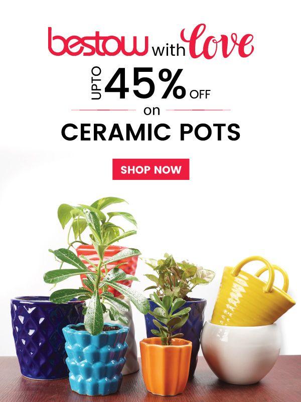 Take It Before It S Gone Upto 45 Off On Ceramic Pots Pots Planters Gardening Ugaoo Homedecor Ceramic Pots Ceramics Ceramic Planters