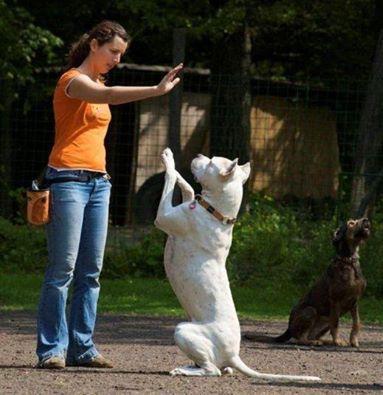 Portland Dog Trainers Dog Training Dog Trainer Dog Obedience