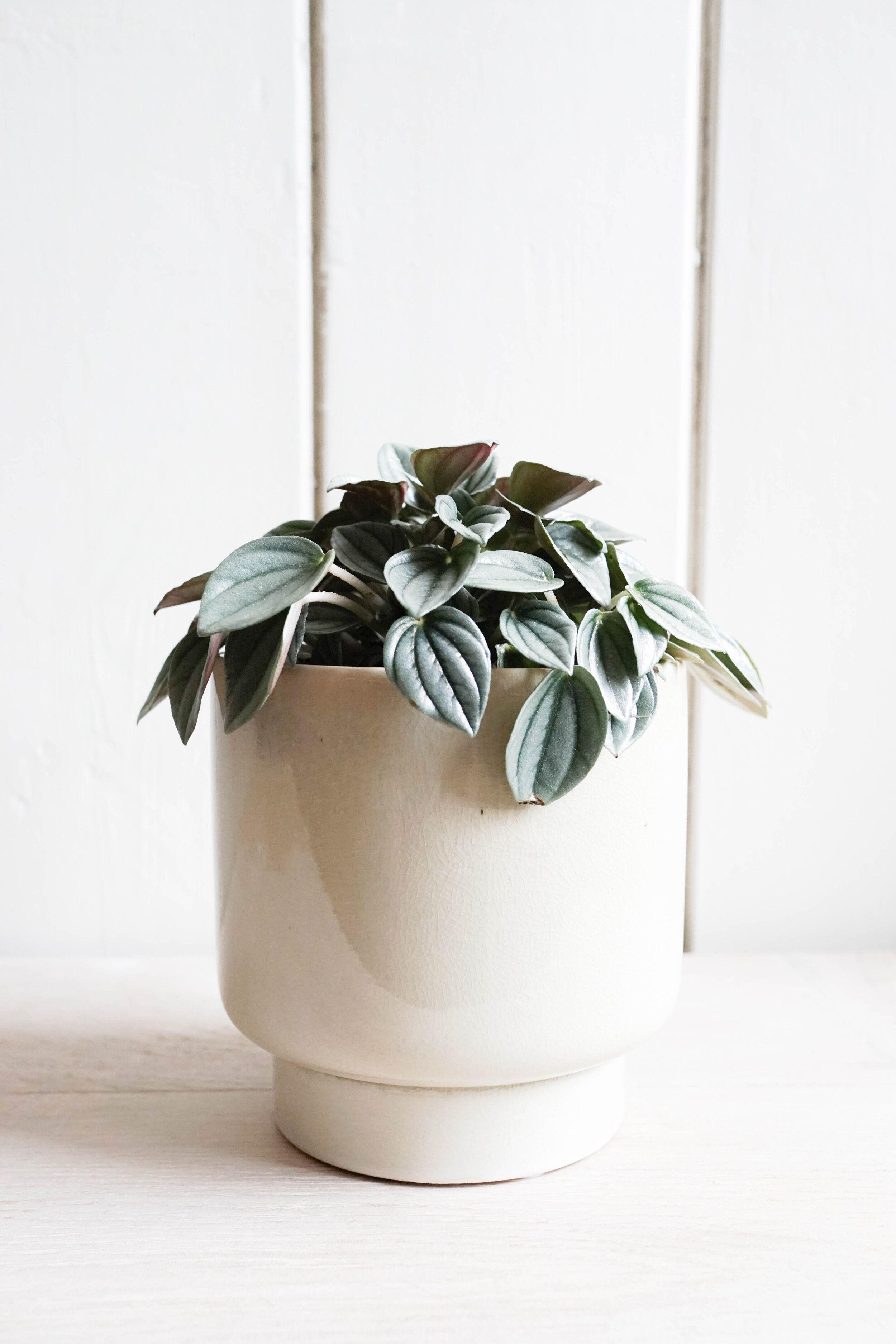 Nord Plant Pot In 2020 Plants Potted Plants Planter Pots