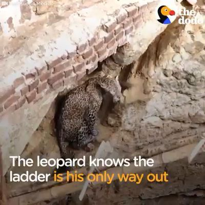 Leopard Stuck In Well & Rescued By Local Villagers