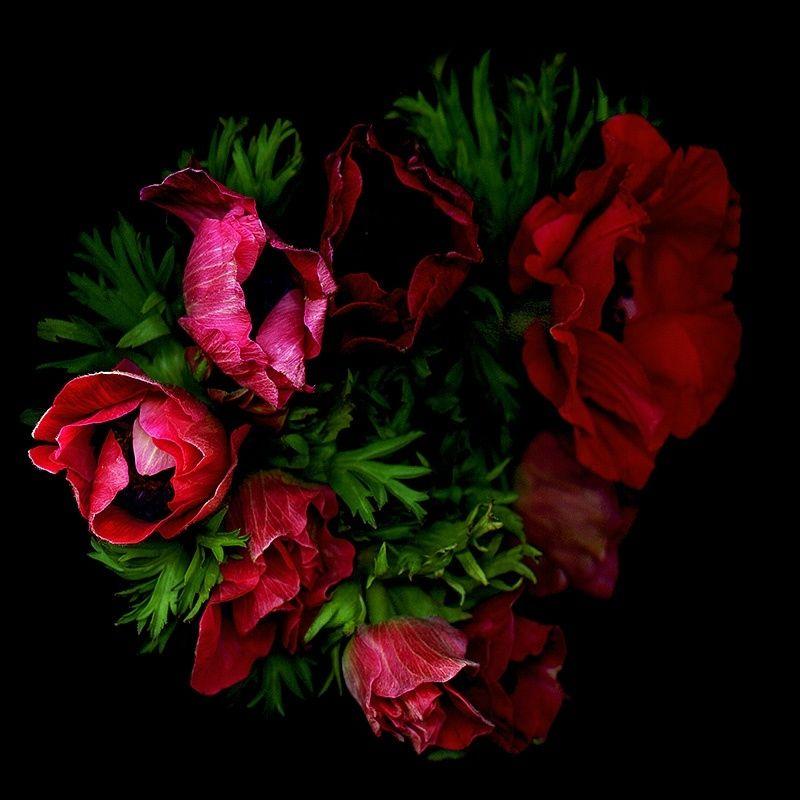 RED RONDO… ANEMONES by Magda Indigo - Photo 180034215 / 500px