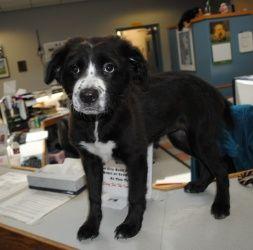 Veronica Von Piddlesworth Is An Adoptable Bernese Mountain Dog Dog In Richmond Va Animal Shelter Mountain Dogs Bernese Mountain Dog