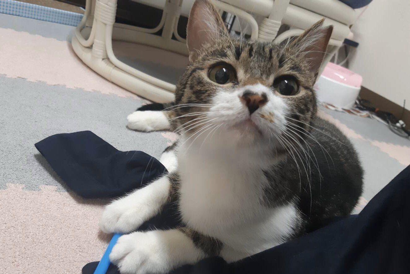 保護猫ルーム Wasao On Twitter Cat Room Cats Pics