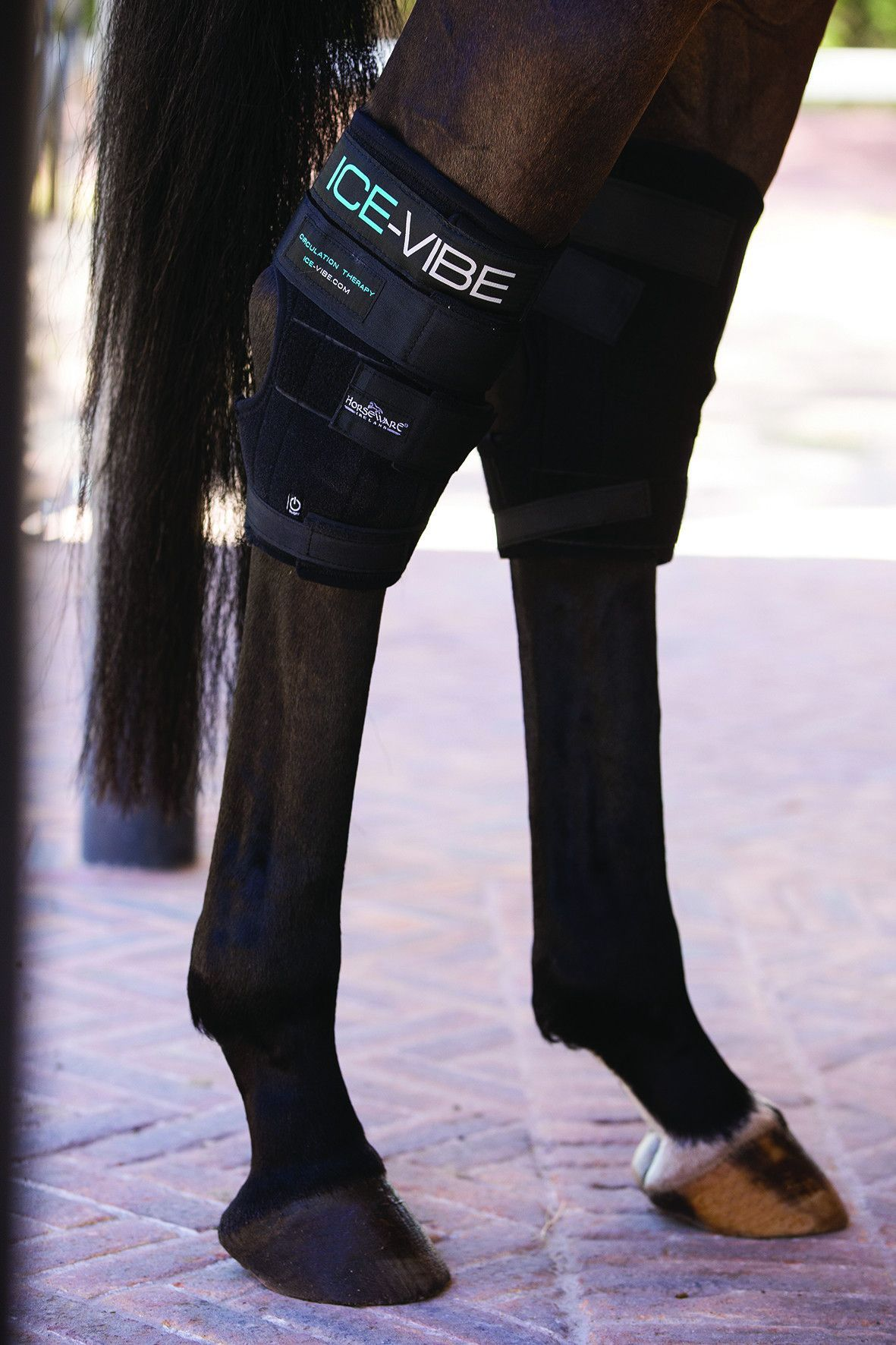 Ice vibe hock boot horse boots riding outfit clothes horse