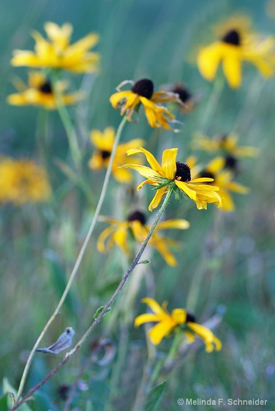 Floral Wilderness