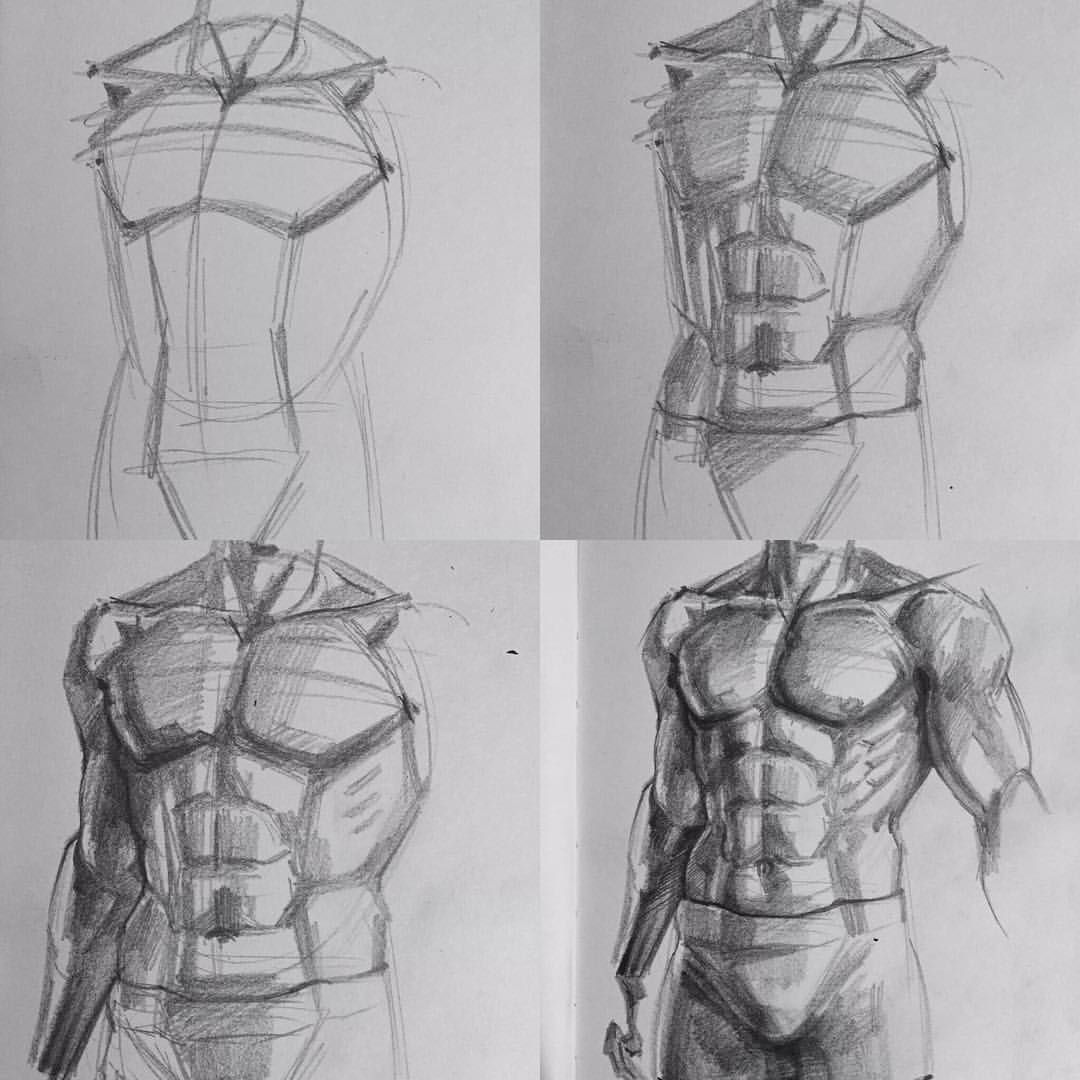 Pin By Christopher Brown On Figure Drawing Pinterest Anatomy