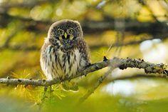 Owl Storytelling: Non tutti sanno che...  alcuni rapaci notturni com...