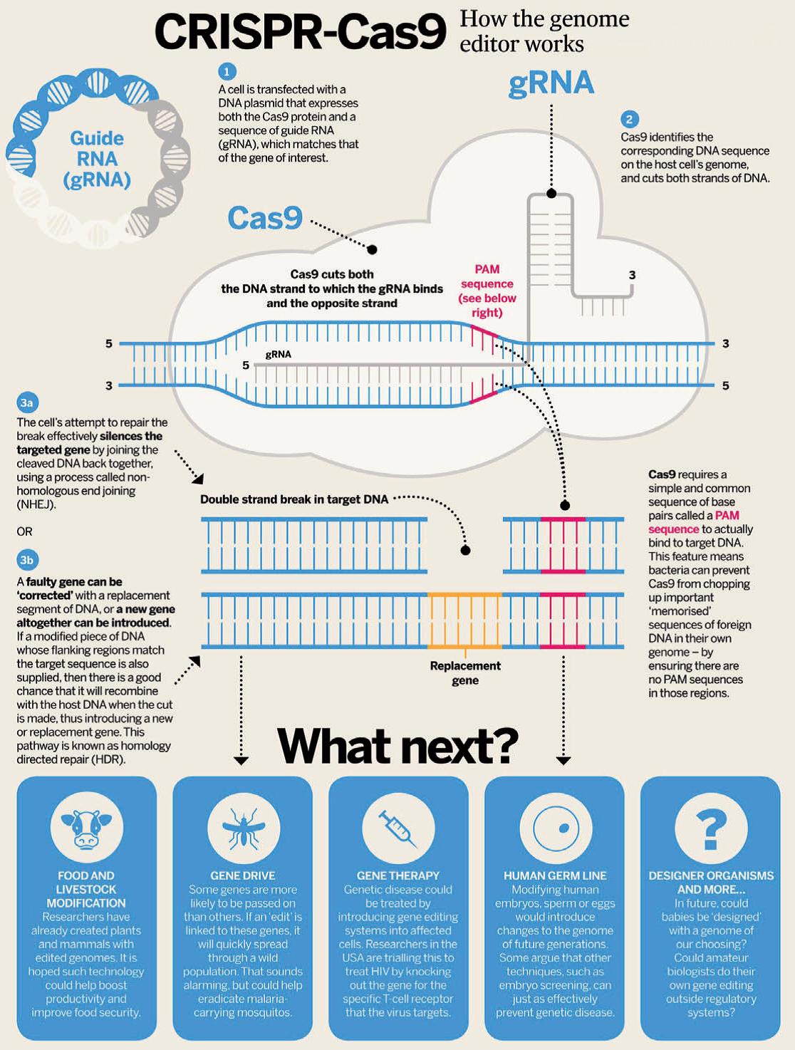 Image Result For Crispr Cas9 Biomedical Science Teaching Biology Science Biology