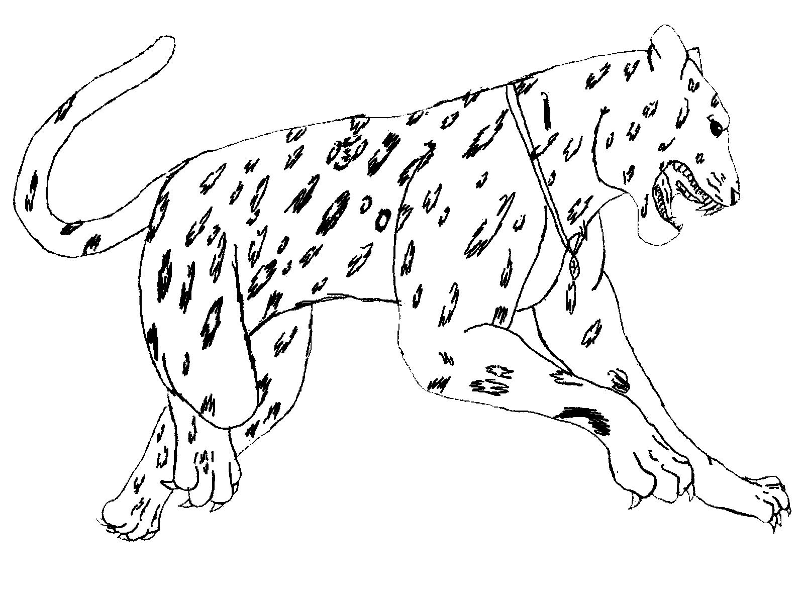 Realistic Coloring Pages Of Animals Jumping Jaguar