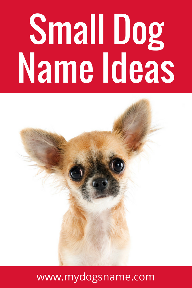 Adorable Small Dog Names 100 Ideas My Dog S Name Dog Names Small Dog Names Funny Dog Names