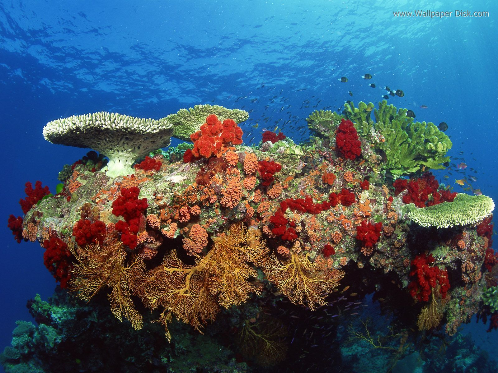 coral and fans.underwater vegetation | Colorful underwater plants ...