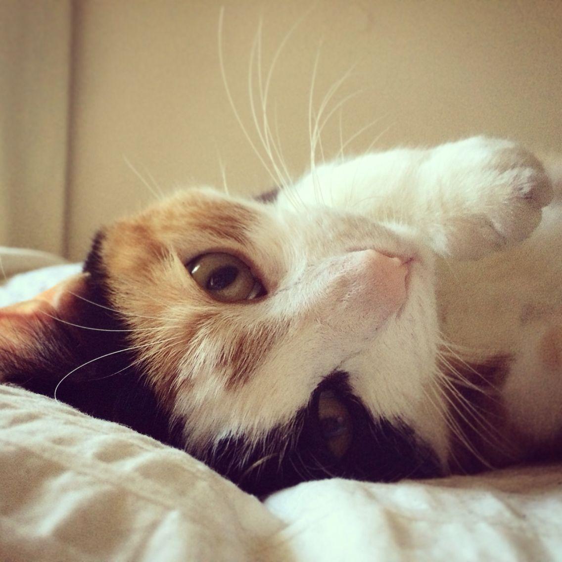 Cat kitten cuteness love