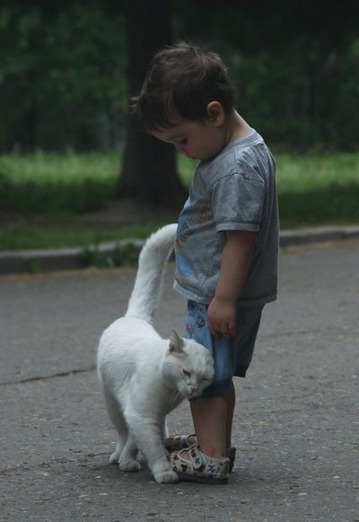 cat1105:  we-love-cute-cats: