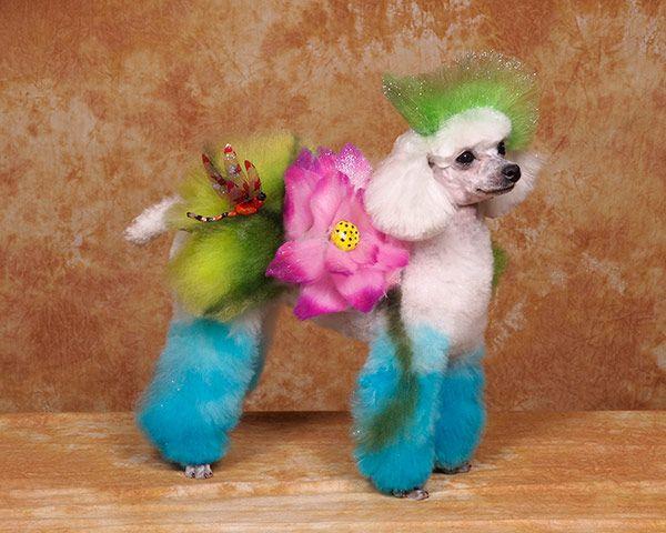 toilettages de chien insolites fleur   Toilettages de chien insolites   toilettage Ren Netherland photo maquillage image chien body painting