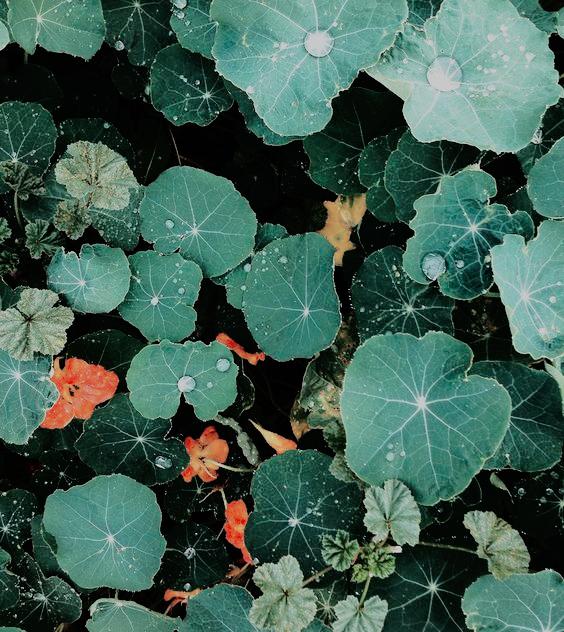 texture inspiration Green aesthetic, Plants, Pretty plants