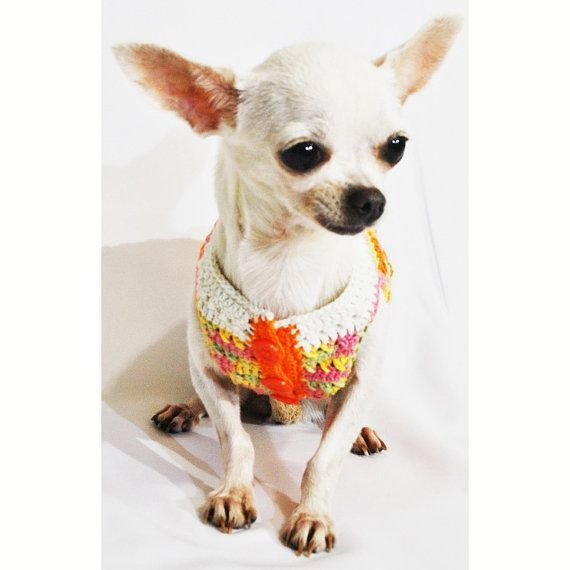Cute Dog Clothes Colorful Orange Pet Clothing Handmade por myknitt