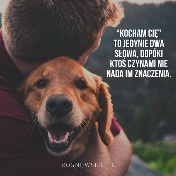 Kocham Cie To Jedynie Dwa Slowa Dopoki Ktos Czynami Nie Nada Im Znaczenia Rosnijwsile Blog Rozwoj Motywacja Sukces S In 2020 Golden Retriever Dogs Retriever
