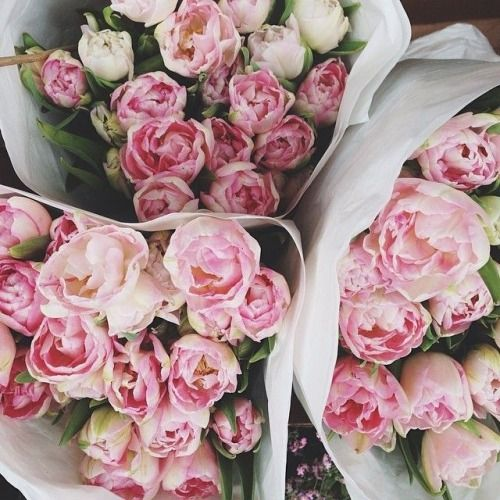 Light Pink peonies