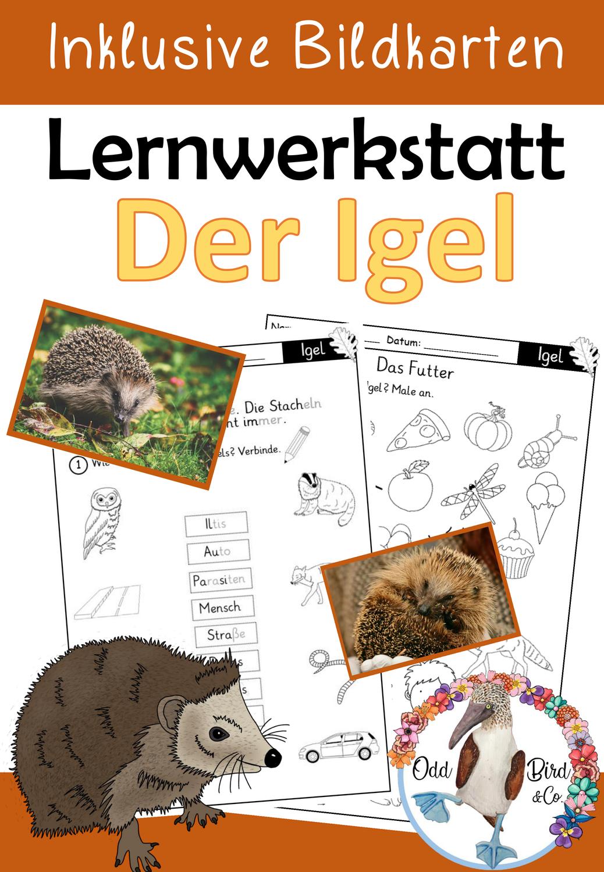 Lernwerkstatt Der Igel Inklusive Bildkarten Und Minihefte Unterrichtsmaterial In Den Fachern Biologie Sachunterricht Bildkarten Lernwerkstatt Minibucher