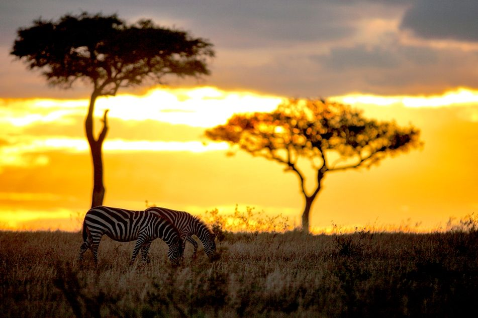 African skies...& zebras. check.