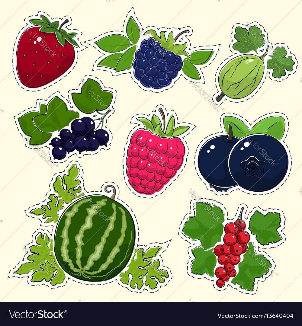 Set of fruit berry stickers vector image on Berries